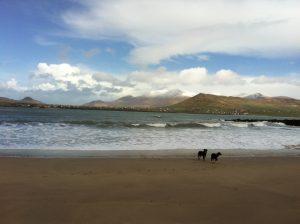 The Dogs on Béal Bán